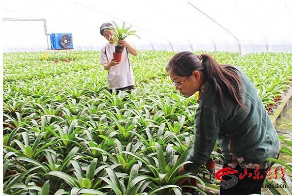 曲阜吴村镇:振兴乡村产业旺 亮点纷呈促发展