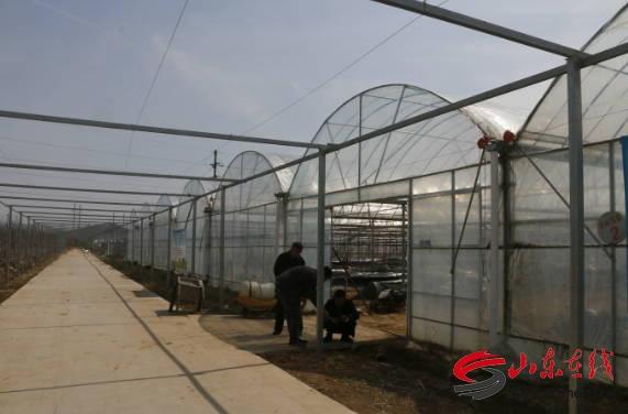 曲阜市尼山镇实施葡萄园区新旧动能转换助力乡村产业振兴