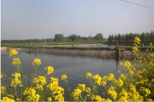 郯城县杨集镇生态养鱼增收
