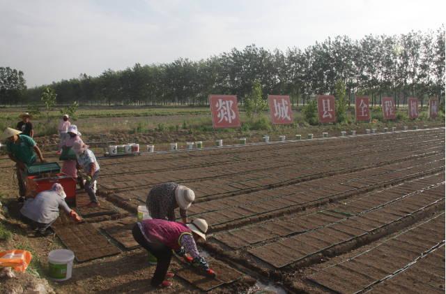 郯城县杨集镇:工厂化育秧促进水稻生产机械化