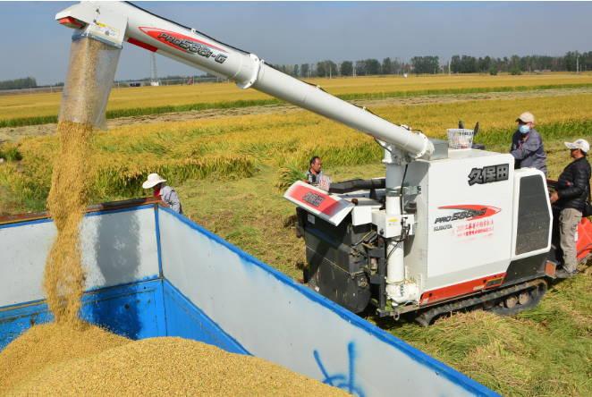 郯城县归昌乡5.6万亩水稻开镰收割