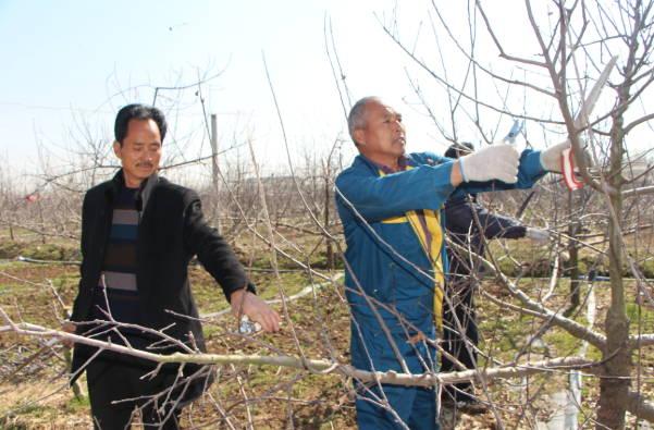 春来果园催农忙  ――郯城县花园镇积极开展春季果园管理