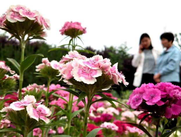 绚丽多彩花满园 打卡欣赏人不断